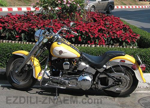Фото мотоцикла Triumph