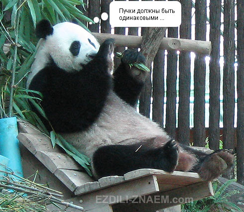 Панда с бамбуком в зоопарке Чангмая