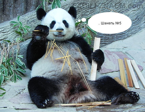 панда любит грызть бамбук