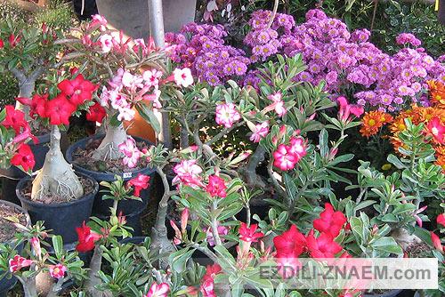 на Празднике цветов Тайланда