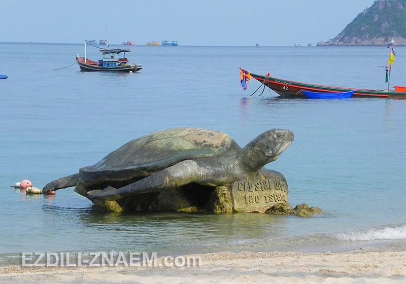 Ко Тао - Черепаший остров