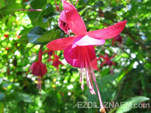 В саду Маримуртра (MariMurtra), Бланес, Испания