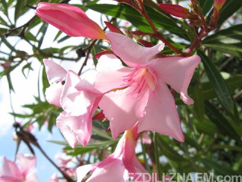 Цветы в саду Маримуртра