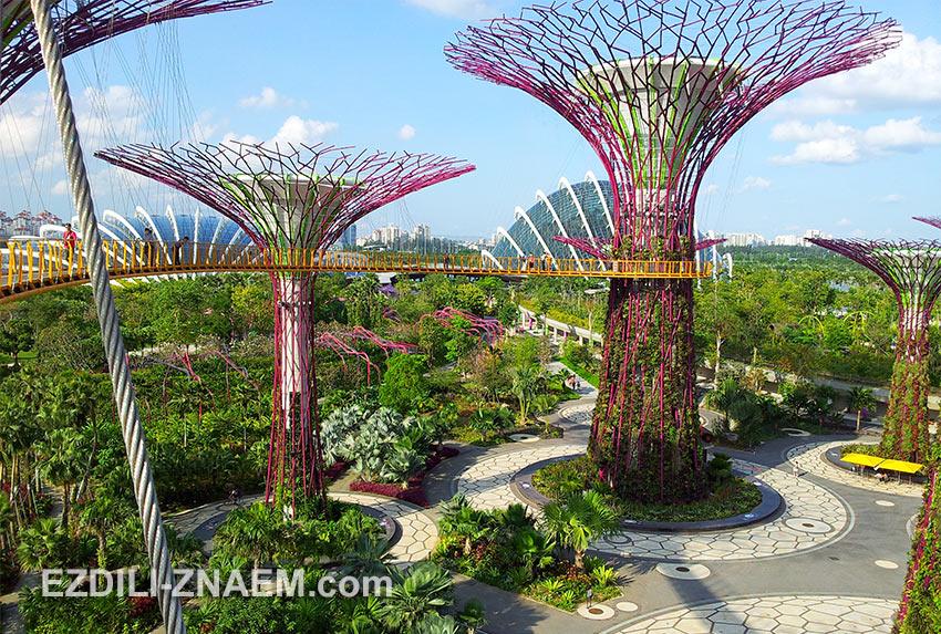 """футуристические супер деревья в """"Парке у Залива"""" в Сингапуре"""