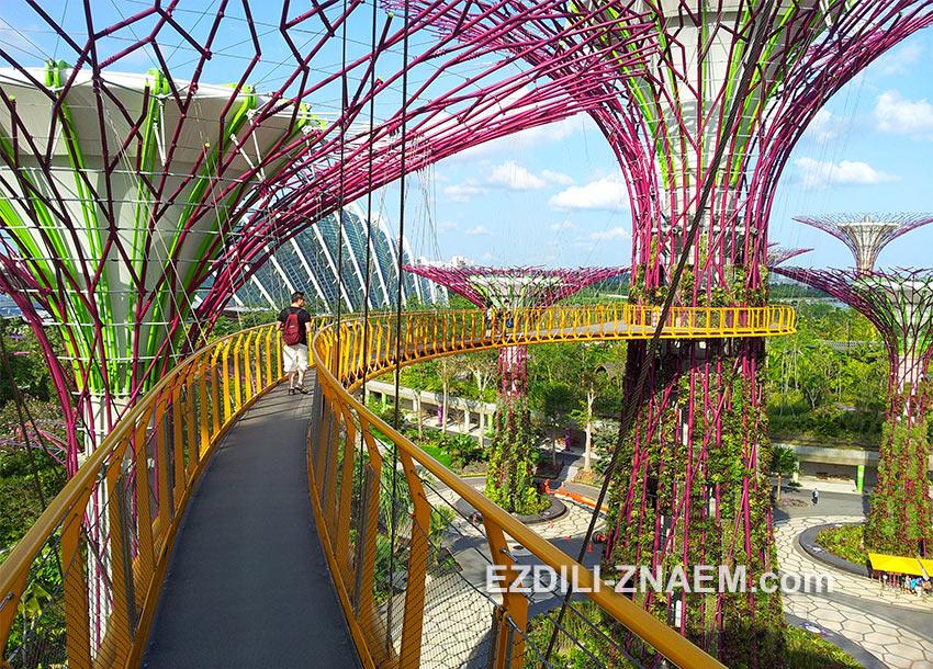 """на высоте """"деревья"""" соединены мостиком с отличным видом на Сингапур"""