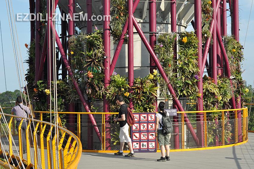 """туристы на мостe между башнями-деревьями в парке """"Garden by the Bay"""". Сингапур"""
