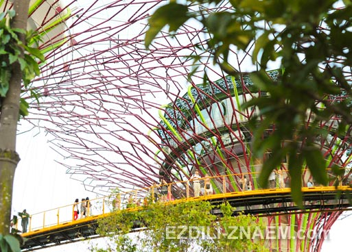 """Центральное """"дерево-ресторан"""" в парке """"Garden by the Bay"""" в Сингапуре"""