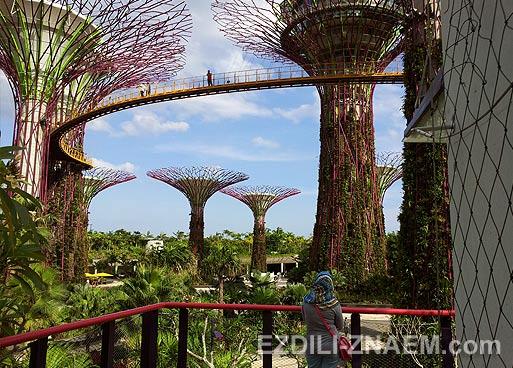 """Достопримечательность Сингапура: """"Сад у Залива"""""""