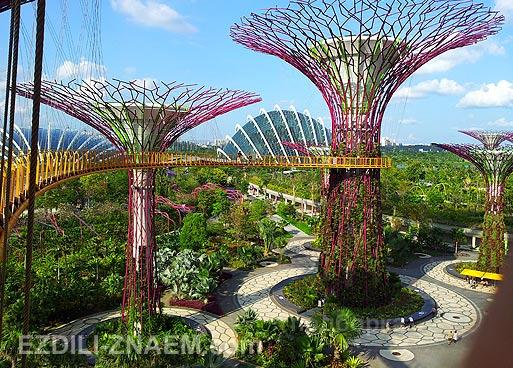 """Супер деревья в """"Парке у Залива"""" в Сингапуре"""
