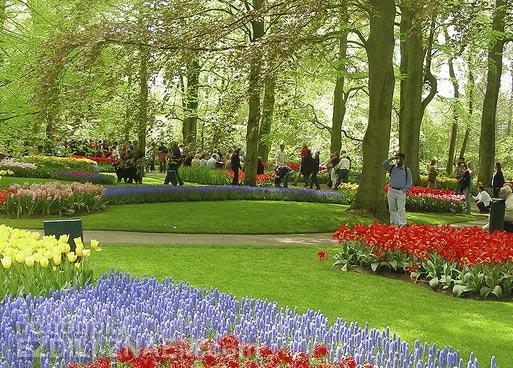 Куда поехать в мае: королевский парк цветов Кукенхоф