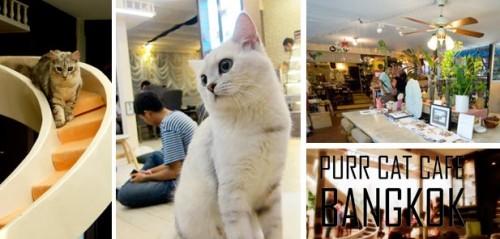 Кошачье кафе в Бангкоке