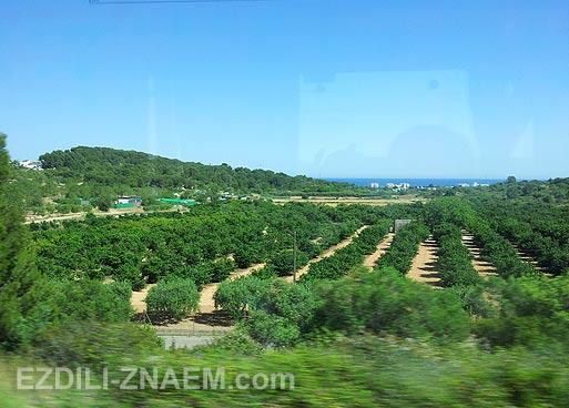 На автобусе ALSA по Испании