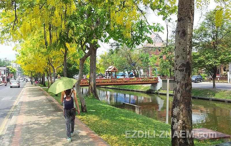 Цветущие деревья в Таиланде