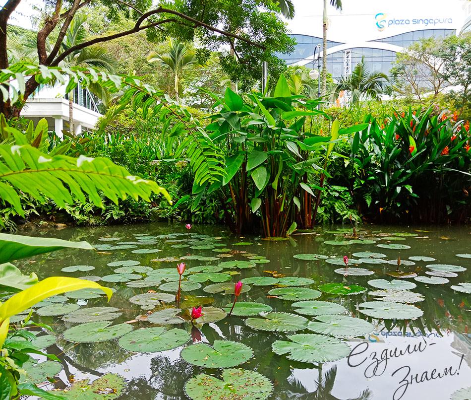 Небольшой парк рядом с Орчард Роад. Пруд с черепашками и цветами.