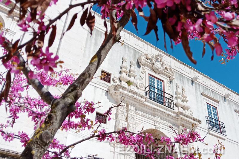 Апрельское цветение в Лиссабоне