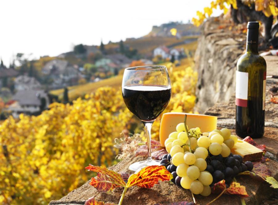 Вино лучше всего пробовать там, где его производят