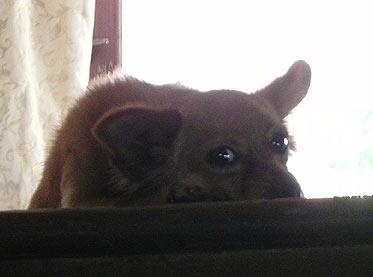 собачка в книжной лавке