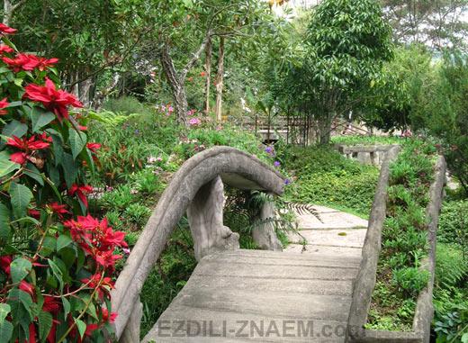 экскурсия в ботанический сад Сирипум