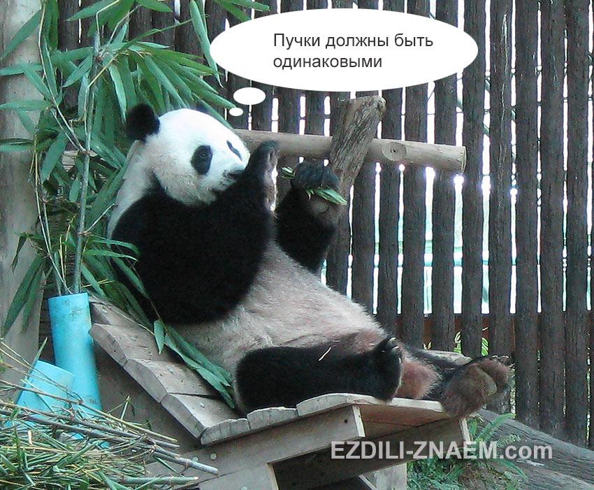 панда естбамбук в зоопарке Чангмая
