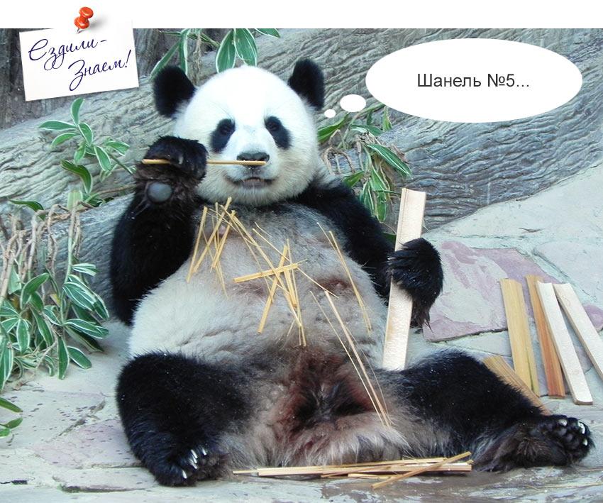 На фото: панда грызет бамбук в зоопарке Чианг Мая