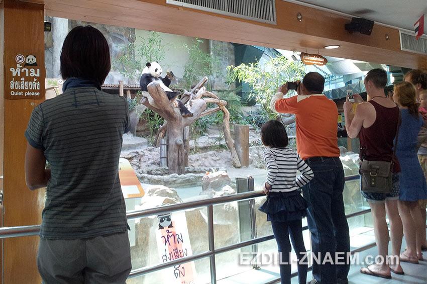 Павильон с пандами в зоопарке Чианг Мая