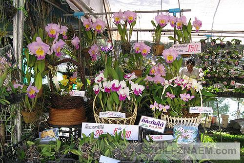Праздник цветов в Тайланде