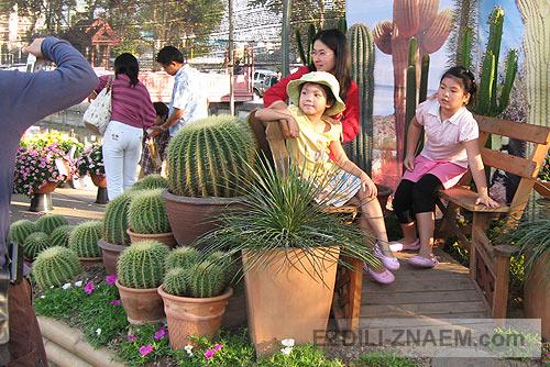 Кактусы на Празднике цветов Тайланда