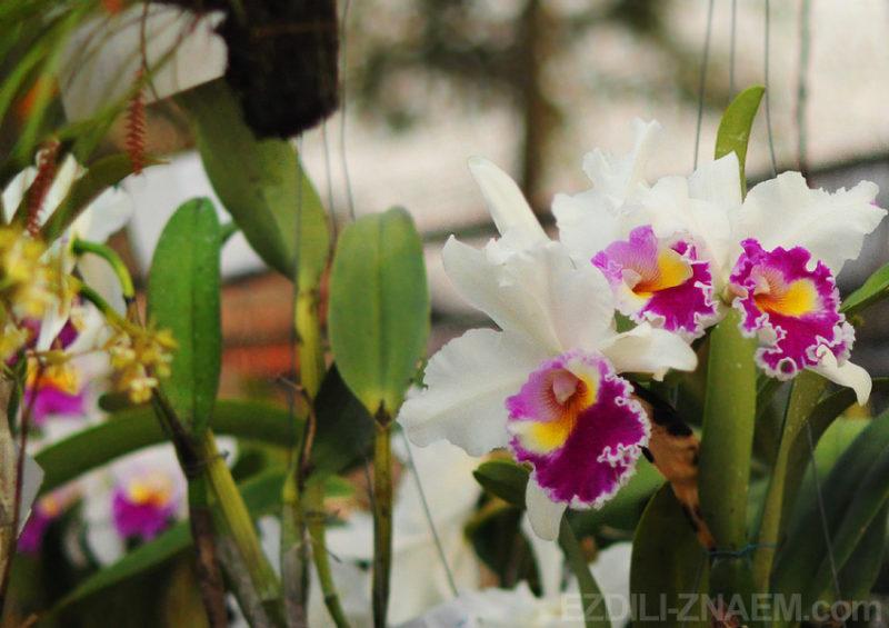 Орхидеи на фестивале цветов в Таиланде