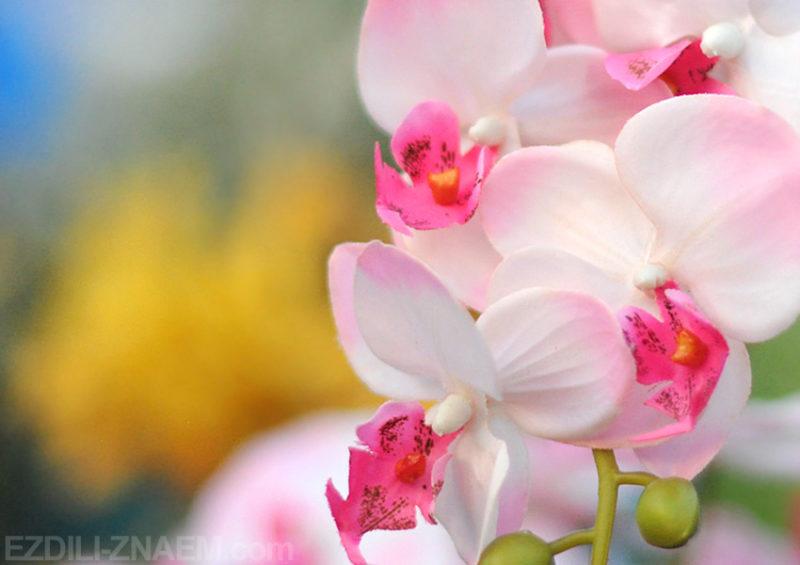 На празднике цветов в Таиланде