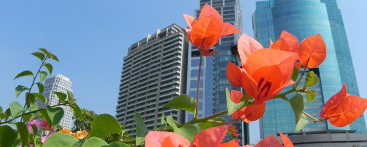 Парки Бангкока: Benjakiti Park