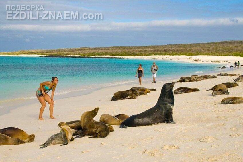 На Галапагосовы острова едут посмотреть интересных животных