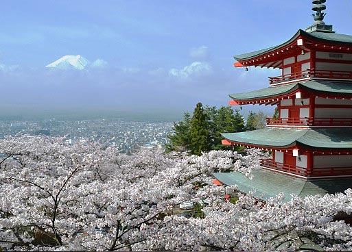 Фудзияма на фоне пагоды и цветущей сакуры в Японии