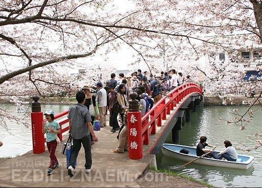 На фестивале цветения сакуры в Хиросаки. Япония
