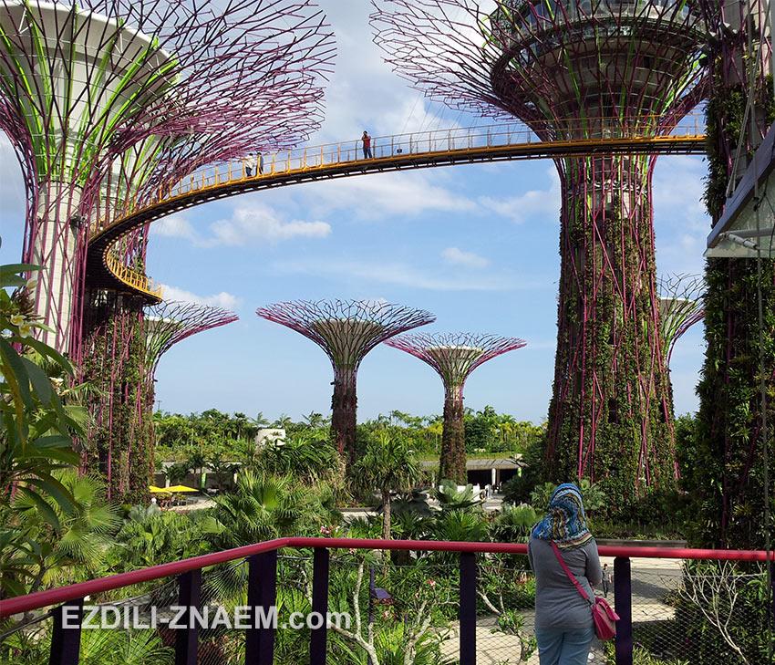 "На фото ""Gardens by the Bay"" - парк футуристических деревьев в Сингапуре"