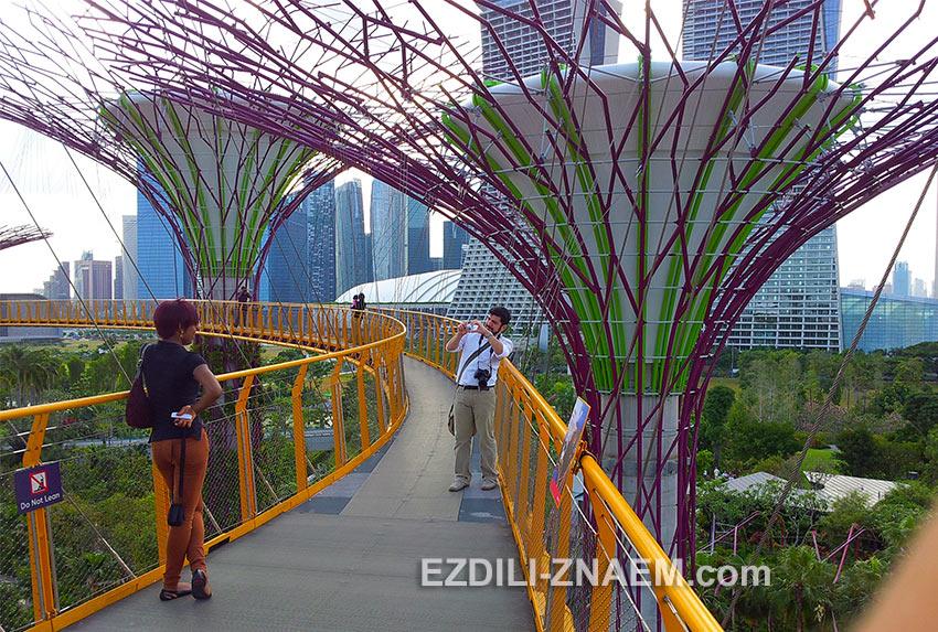 """туристы любят фотографироваться на мосту SkyWay в """"Парке у Залива"""". Сингапур"""