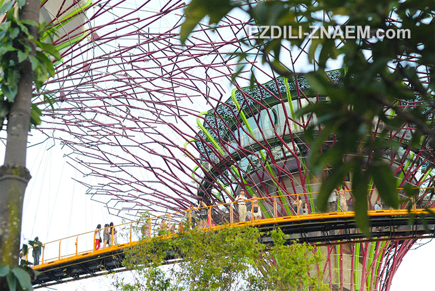 """дерево-ресторан"" в парке ""Garden by the Bay"" в Сингапуре"
