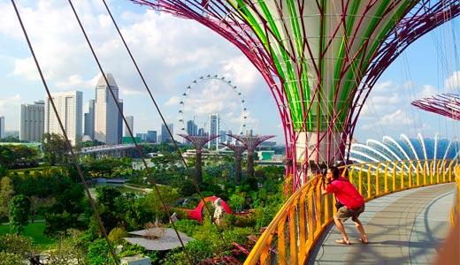 Гигантские супер деревья - главная достопримечательность Сингапура