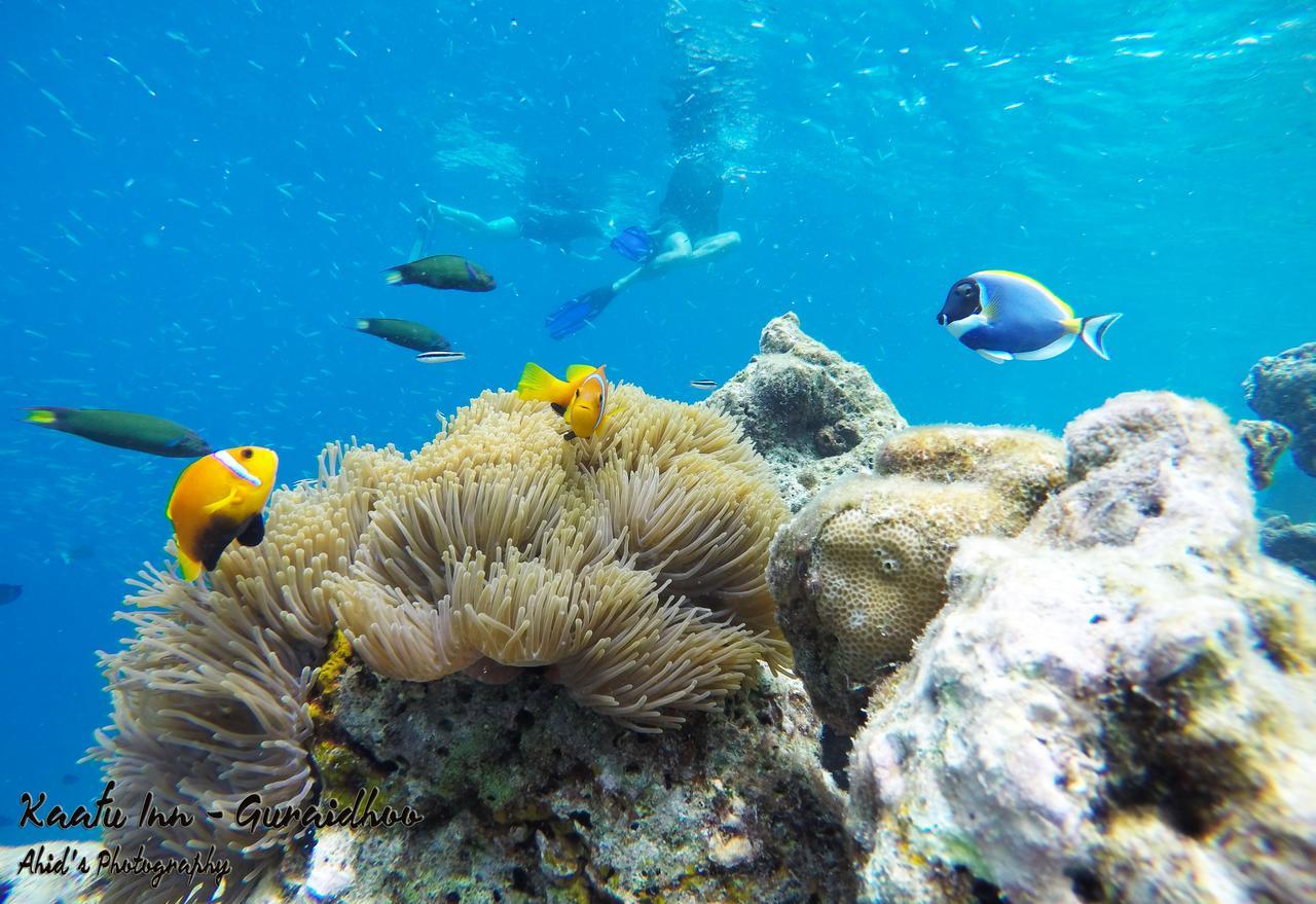 Риф на Мальдивах