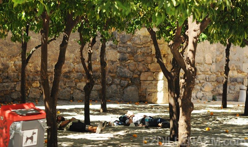 Европа, Испания. Полуденный отдых среди мандаринов