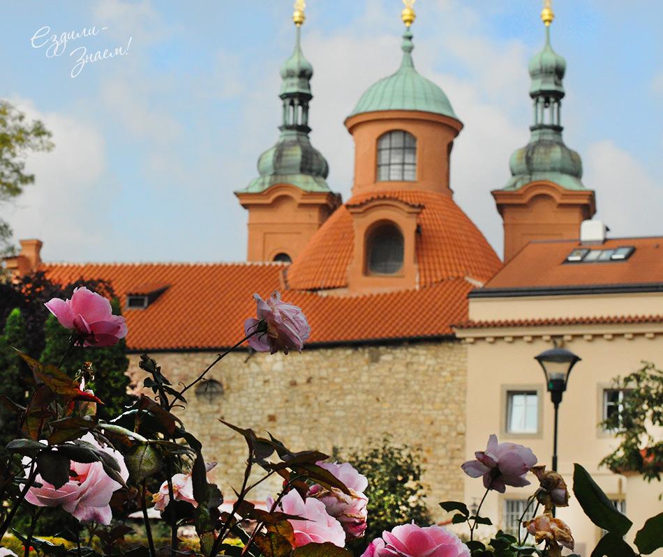 Розы в парке Петршин
