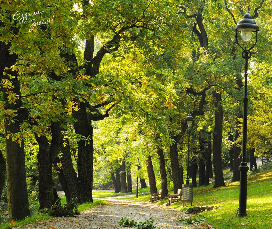 Аллеи в Парке Петршин