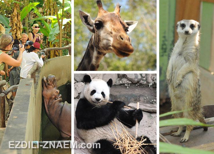 Зоопарк в Чиангмае, Таиланд