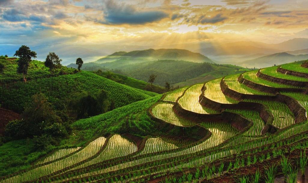 Рисовые террассы рядом с Чиангмаем