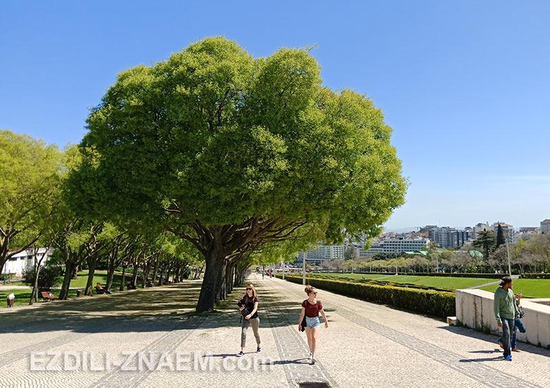 Парк Эдуарда VII в Лиссабоне