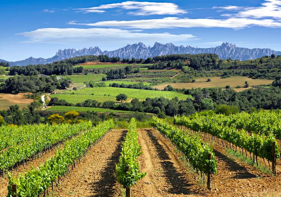 Испания, винный регион Пенедес