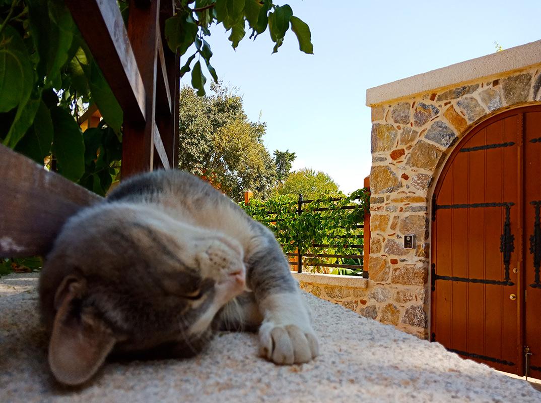 Турецкий котик
