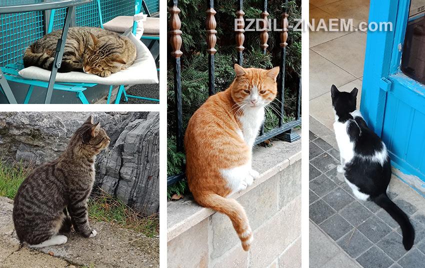 стамбульские котики - главная фишка города