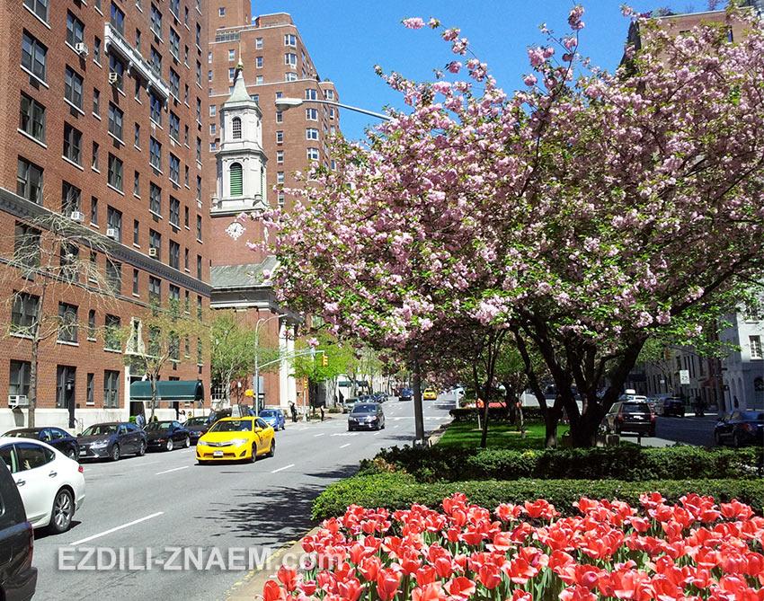 Апрель - лучшее время для поездки в Вашингтон и Нью-Йорк