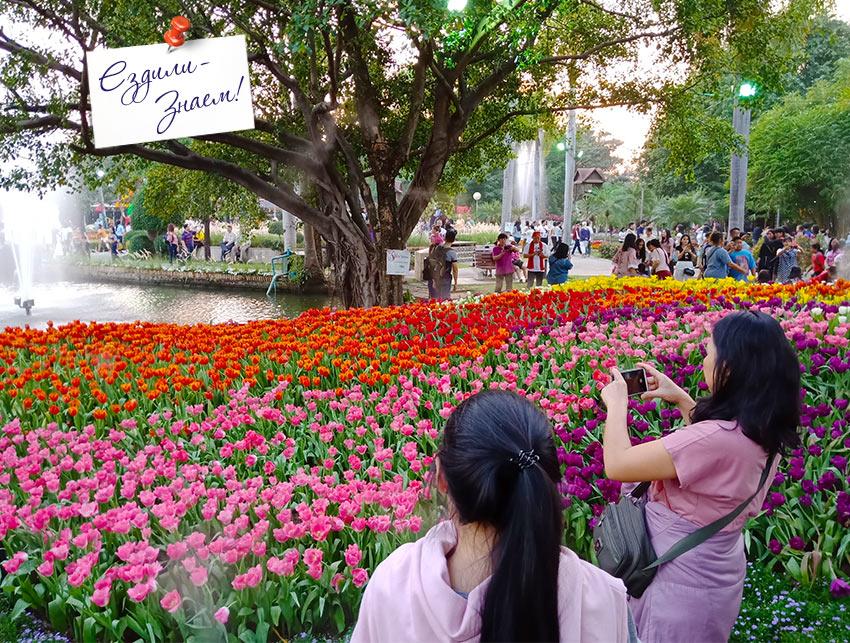 Цветочные поляны на фестивале цветов. Парк Buat Hat в Чианг Мае