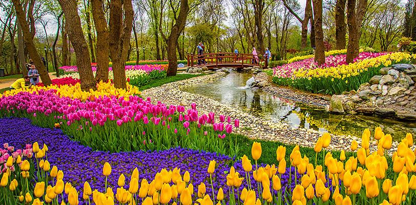 Тюльпаны в Стамбуле в апреле